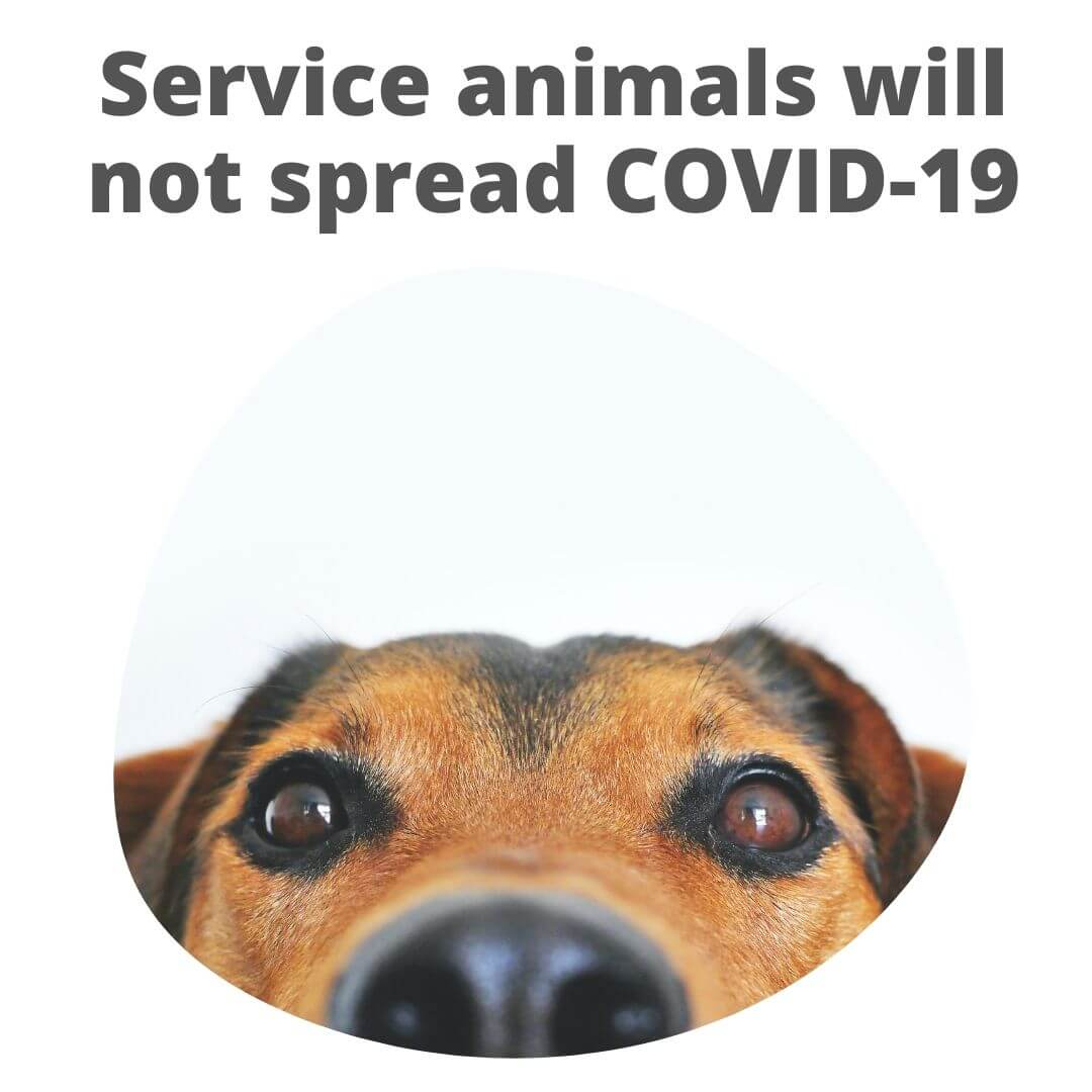 Service dogs or pets do not spread COVID-19